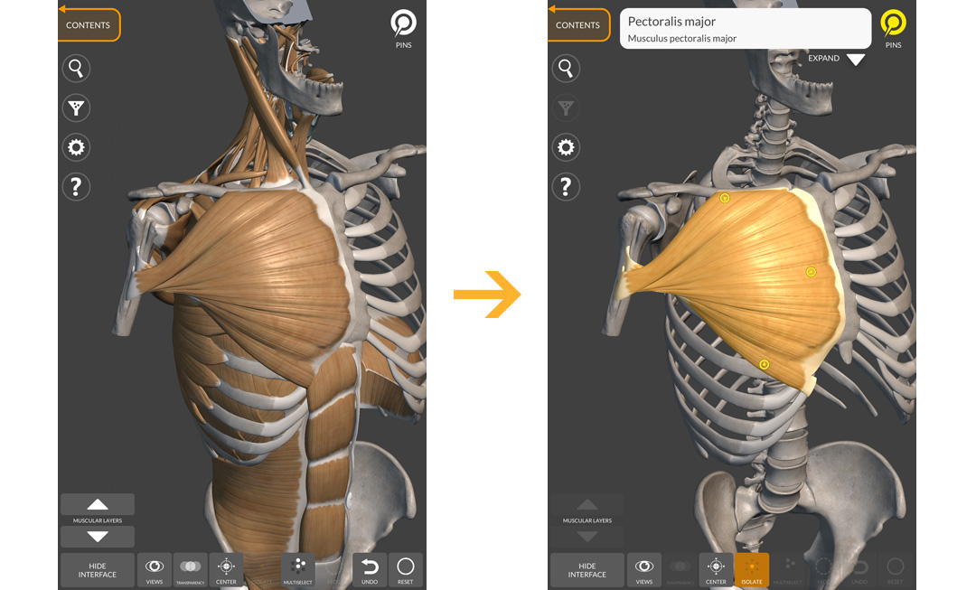 Anatomy For The Artist App For Iphone Ipad Mac Os And Android